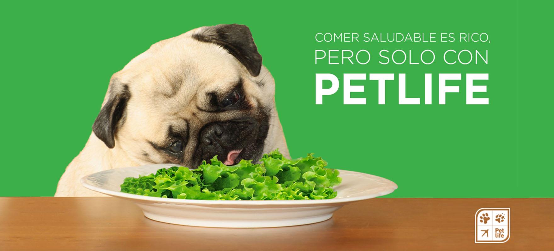 Evita cambios bruscos en la dieta de tu mascota