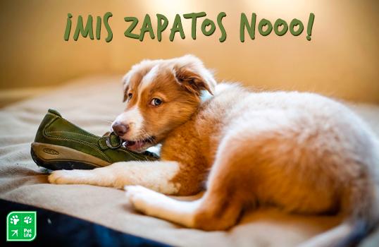 5 pasos para ponerle fin al mordisqueo indebido de su perro