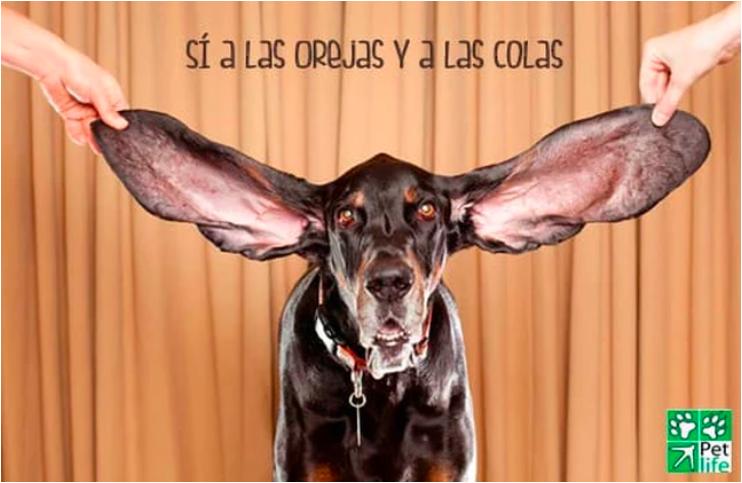 7 Razones para NO Cortar la Cola ni las Orejas a los Perros