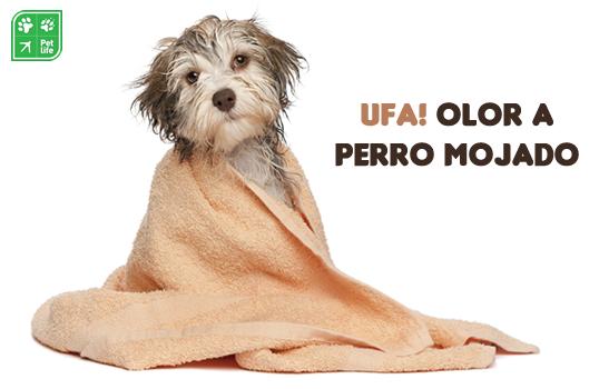 ¿Qué causa el olor a 'perro mojado' y cómo puedo evitarlo?