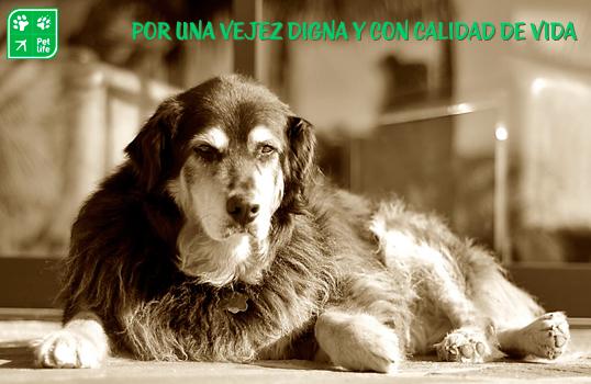Perros viejos