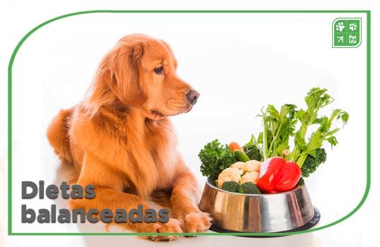 En qué se diferencian los alimentos balanceados a las dietas caseras