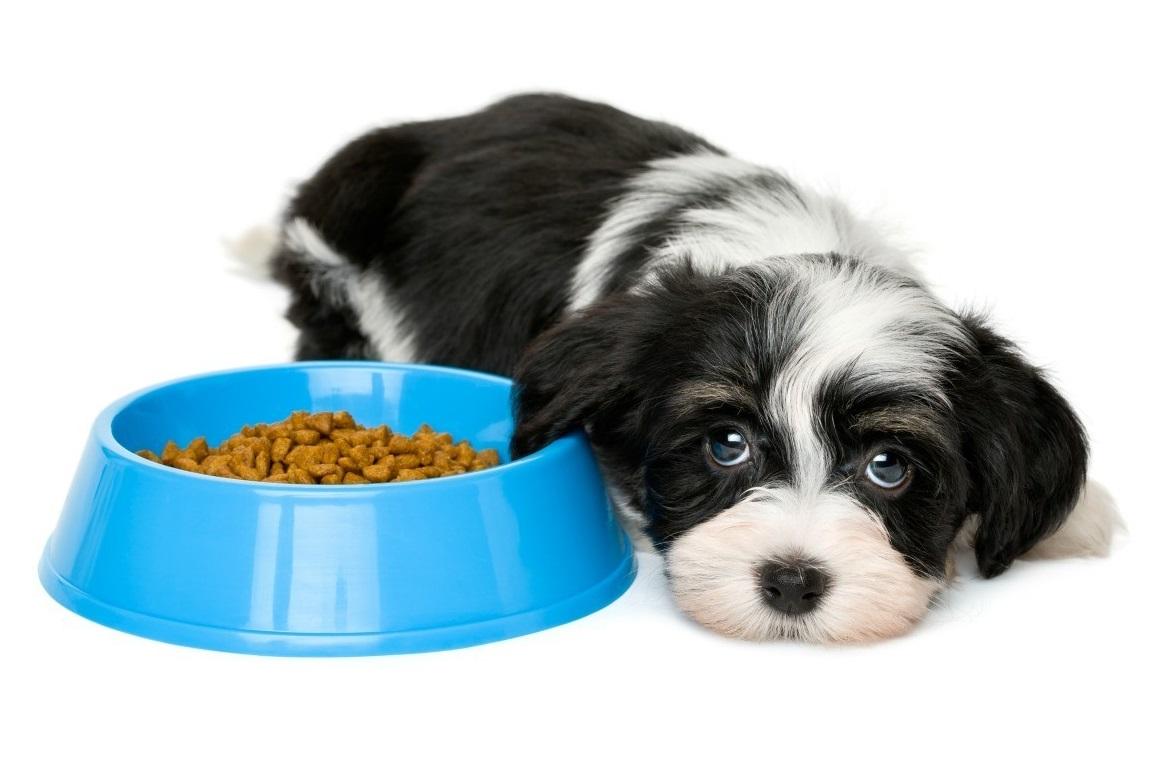 Mi perro no quiere comer, que hago?